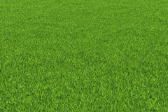 Grass background. Stock Photo