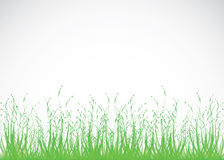 Grass background. Vector illustration of grass background Royalty Free Stock Photography