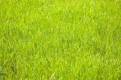 Grass background. Stock Photography