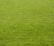 Grass background. Natural color grass field, focus on foreground Stock Photography