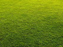 Grass background. Mowed grass lawn forming green background Stock Image