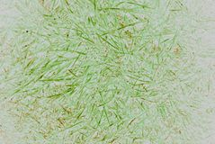 Grass background. Green abstract background on white background Stock Image
