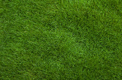 Grass background. Detail closeup of grass background Royalty Free Stock Images