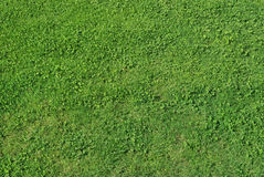 Grass background. Horizontal, detailed and homogeneous texture of grass Stock Images