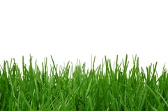 Grass Background. Grass isolated on a white background Stock Photos