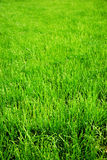 Grass background. Portrait layout, blurry on top stock photo