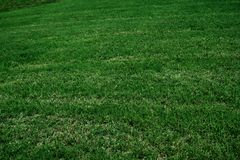 Grass Background. Lush green grass background filling the frame Royalty Free Stock Photography