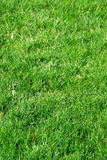 Grass background Royalty Free Stock Image