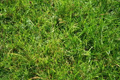 Grass background royalty free stock images