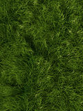 Grass background. Illustration of realistic green grass background Stock Photography