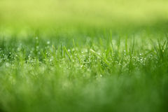 Grass Background : Abstract natural background green grass with a beautiful bokeh Royalty Free Stock Photo