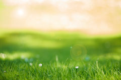 Grass background. Abstract background with grass and sunlight gleaming through trees royalty free stock photo
