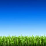 Grass on the background of blue sky. Beautiful green grass on the background of blue sky Royalty Free Stock Photo