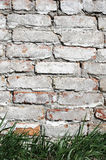 Grass on a background of a brick wall painted Try white paint Royalty Free Stock Photos