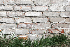 Grass on a background of a brick wall painted Try white paint Stock Images