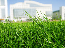 Grass on a background buildings Royalty Free Stock Photo