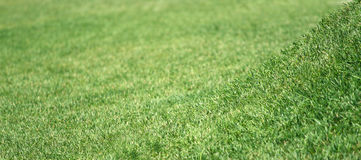 Grass. Background closeup with elevation in focus Royalty Free Stock Photos