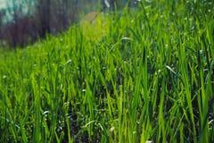 Grass background closeup photo Stock Image