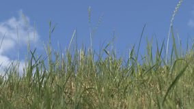 The grass on a background of clouds Royalty Free Stock Photos