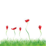 Grass background, flowers red. Illustration Stock Photo