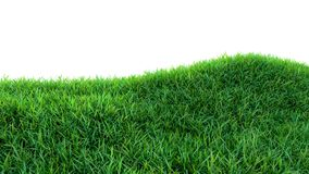 Grass background, fresh green fields, isolated Stock Photography