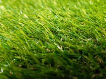Grass background. Fresh lawn grass texture. Perfect green grass. Carpet. Grass backdrop for your design Stock Images