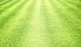 Grass background Golf Courses green lawn. Pattern textured background Royalty Free Stock Photo