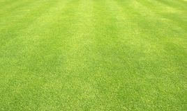 Grass background Golf Courses green lawn. Pattern textured background Stock Images