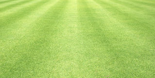 Grass background Golf Courses green lawn. Pattern textured background Royalty Free Stock Images