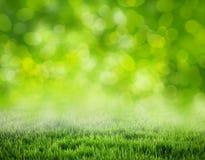 Grass background Stock Photo