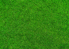 Grass. Background green color and fiber royalty free stock image