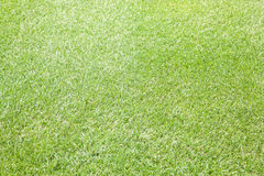 Grass background. Green cut lawn grass background with selective focus Royalty Free Stock Photography