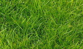 Nature. Background with Green Grass Stock Image
