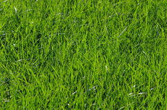 Nature. Background with Green Grass Stock Photos