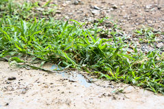 Grass background. Green grass background near cement sidewalk Stock Photo