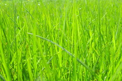Grass background - green stock photo Stock Image