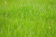 Grass background - green stock photo Royalty Free Stock Photos