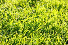 Grass background - green stock photo Stock Photography