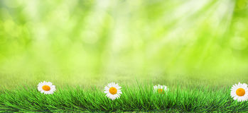 Grass background Stock Images