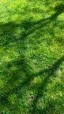 Grass background. Green grass under the shade Stock Photos