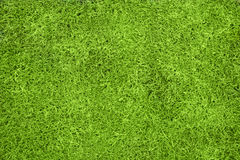 Grass Background. A green grass background viewed from above with copy space Royalty Free Stock Photography
