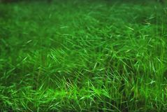 Grass background green wall Stock Photos