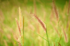 Grass background image Stock Photography