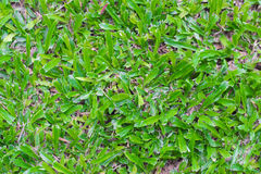 Grass background. The grass background looking good Stock Images
