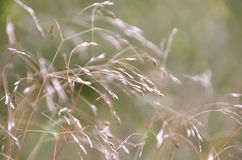 Grass Background. A Natural Abstract Grass Background Stock Image