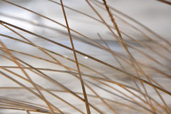 Grass Background. A Natural Abstract Grass Background Royalty Free Stock Image