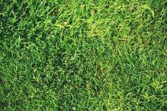 Grass background. natural fullframe background. Grass background. natural fullframe background Royalty Free Stock Image