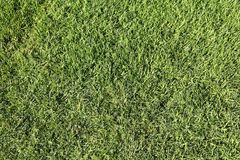 Grass background. Natural green grass background. Golf course lawn backdrop Stock Photography