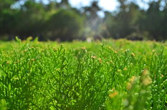 Grass for background Stock Photo