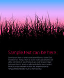 Grass background with place for your text Royalty Free Stock Images